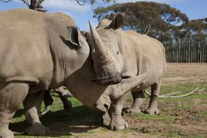 Monarto Zoo - Inverell Accommodation