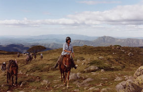 High Country Horses - Inverell Accommodation