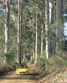 Mount Shadforth Scenic Drive - Inverell Accommodation