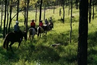 Hunter Valley Horse Riding and Adventures - Inverell Accommodation