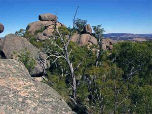 Evans Crown Nature Reserve - Inverell Accommodation