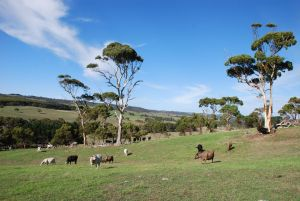 Lisieux Farm Bed and Breakfast - Inverell Accommodation